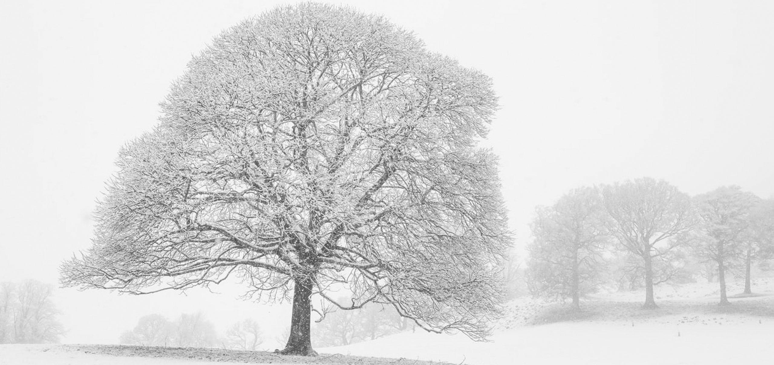 header-drzewo-dinuovo
